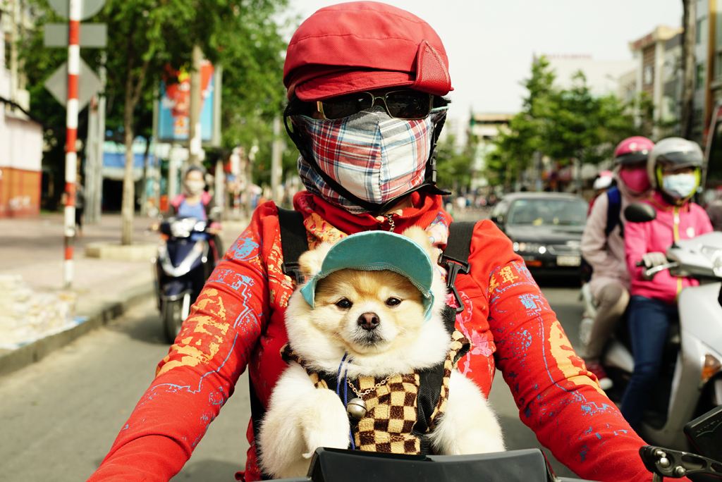 Woman with a colored %22Cover-up Style%22 and her dog driving on the street of H.C.M.C. Vietnam. June 2015